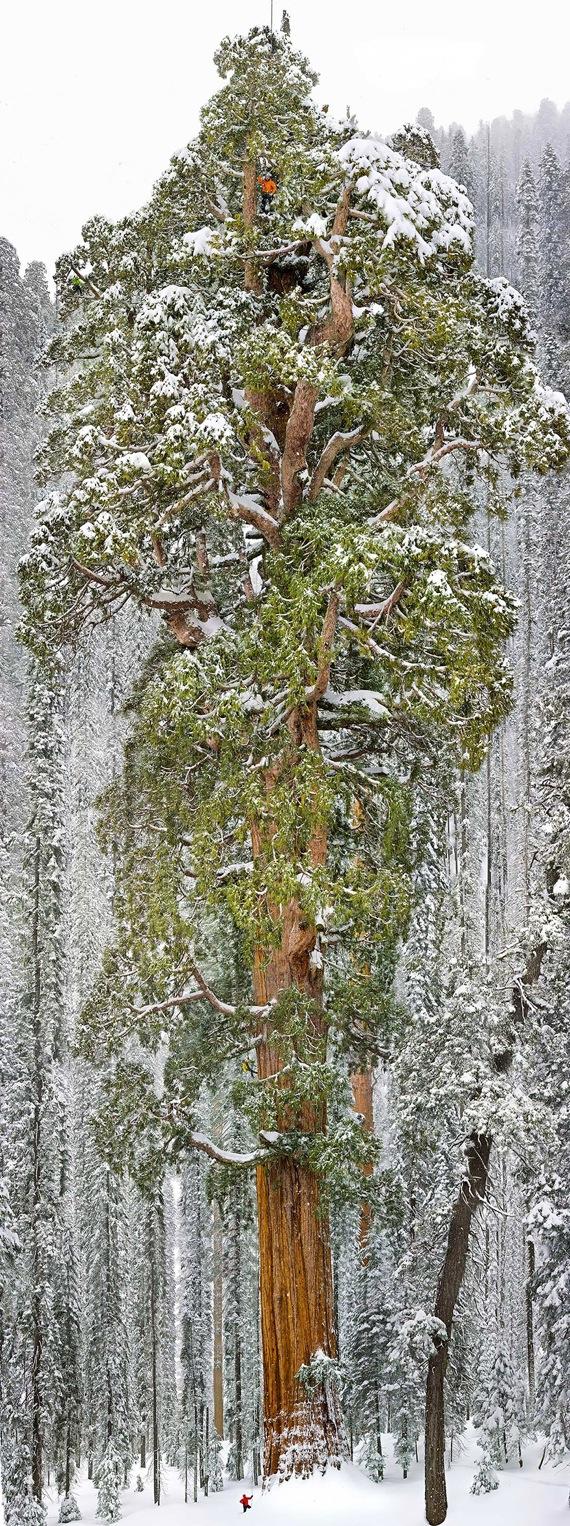 カリフォルニア州 セコイア国立公園