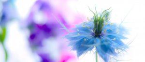 ピタリ目が止まった美しい花の写真