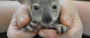 手のひらサイズの動物赤ちゃん