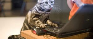 表情がかわいいパソコン作業中ネコ